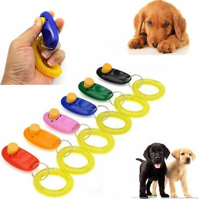 Oktató kutya klikker
